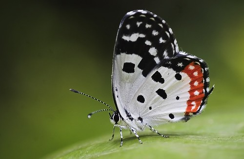 20 Most Beautiful Butterfly photographs of the World ...  20 Most Beautif...