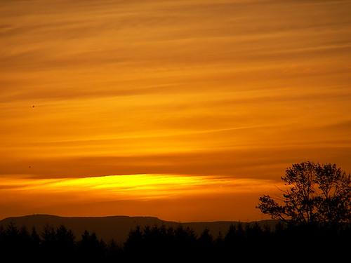 trees sunset orange yellow clouds oregon geotagged evening skyshots stayton utata:project=uplandscape geo:lat=44809868 geo:lon=122792237 colororangered