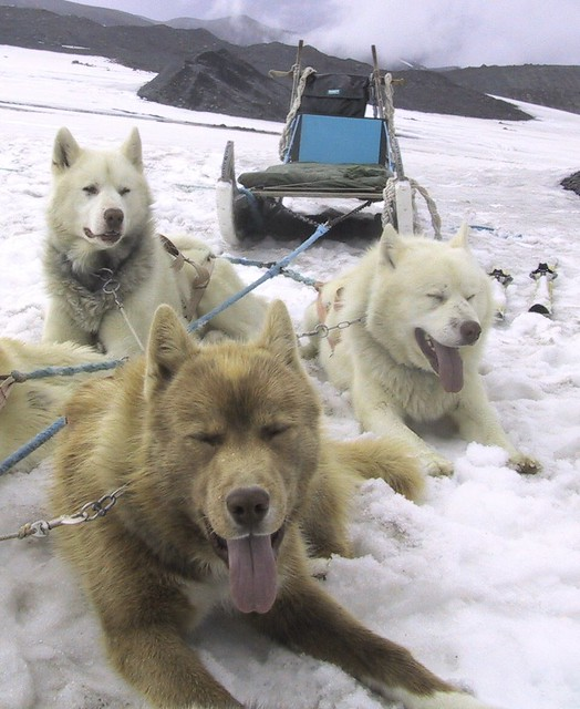 Dogsledding dogs taking a, Canon POWERSHOT S20