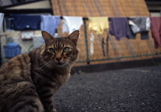 洗濯物と猫