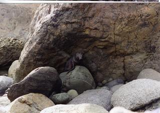New Zealand Shoreline & Seals