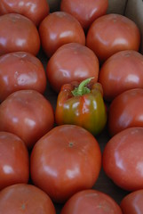 potato and tomato genus, vegetable, plum tomato, tomato, produce, food,