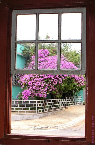 Pela Janela - From Window I Can see flowers!