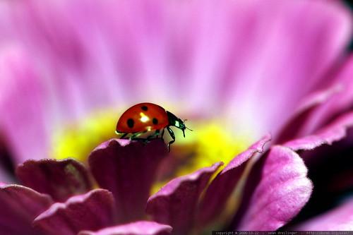 ladybug profile    MG 2689