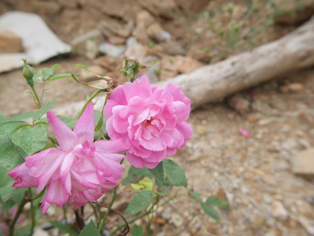 les jardins sont beaux en mai ! - Page 2 27228663997_df760b0fbe_z
