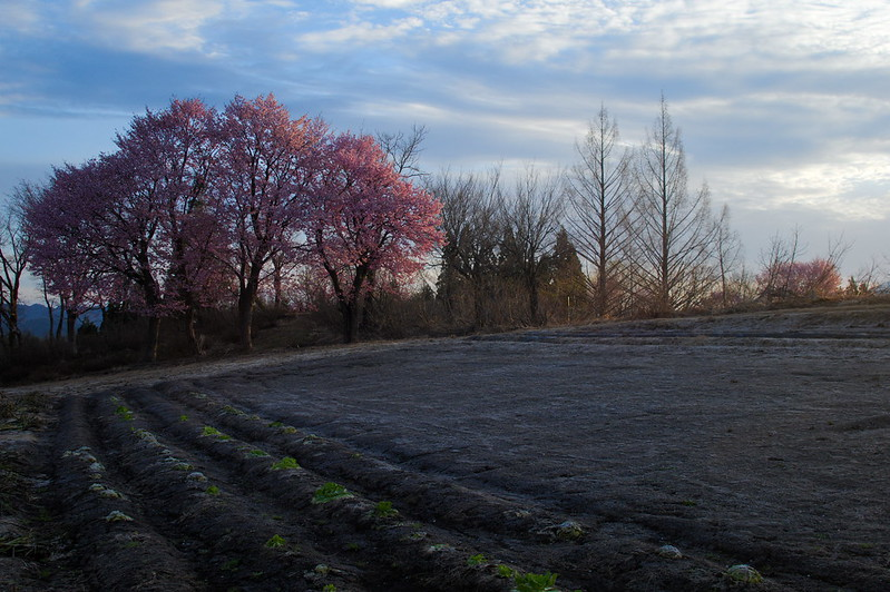 桜のある風景 #6_201804_NO1