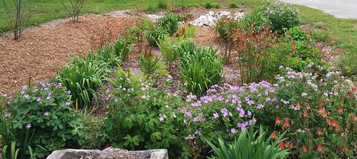 Rain_Garden_File_Photo