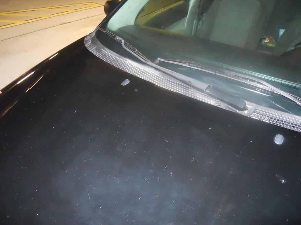 bird damage beyond repair