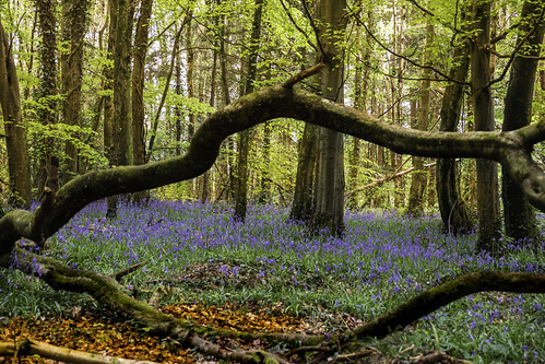 Killinthomas Wood