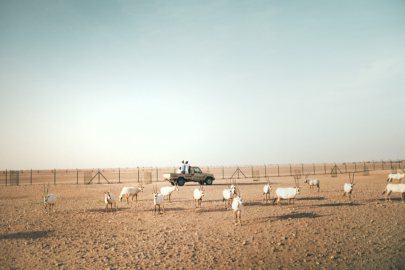 Arabian Oryx Sanctuary, Oman