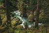 Quinalt River Trail by Kyle D Adams