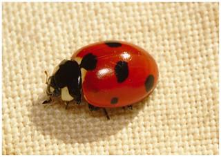 Ladybird IMG_0828