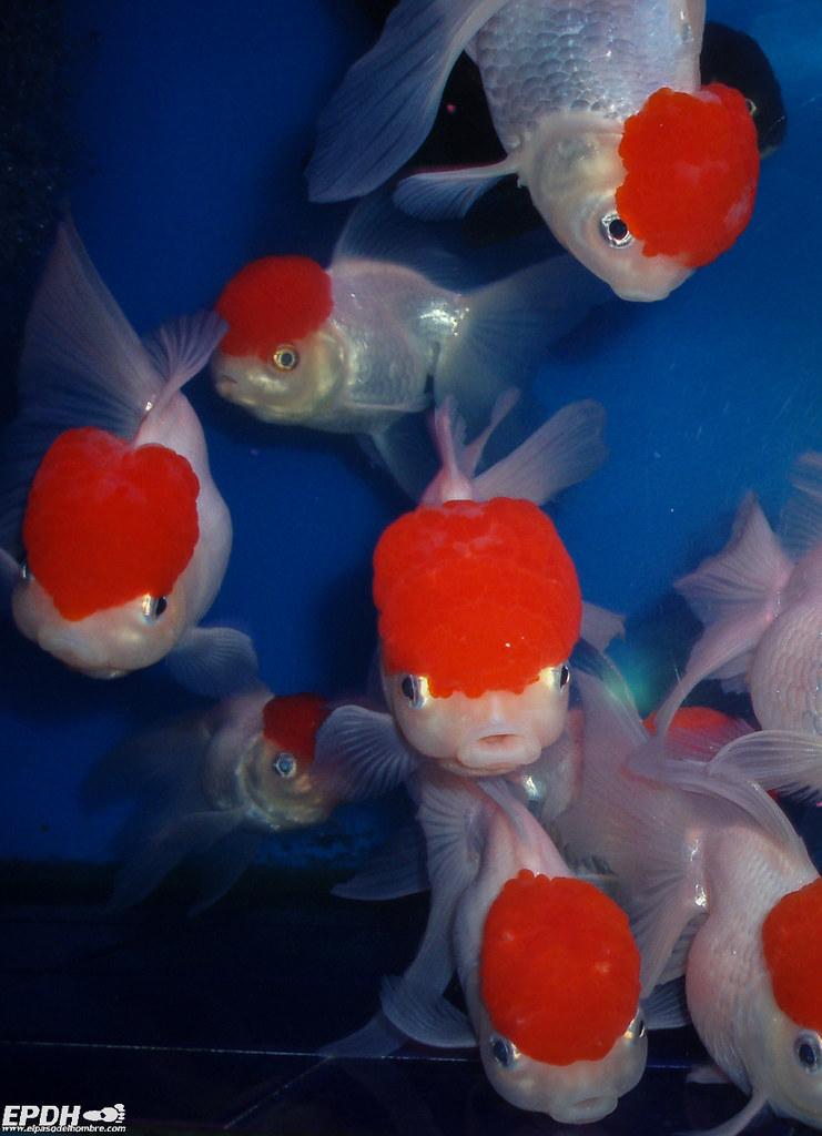 04-peces
