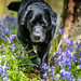 It's Bluebell time again! by Marcus Legg