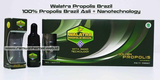 Harga dan Cara Pemesanan Walatra Propolis Brazil