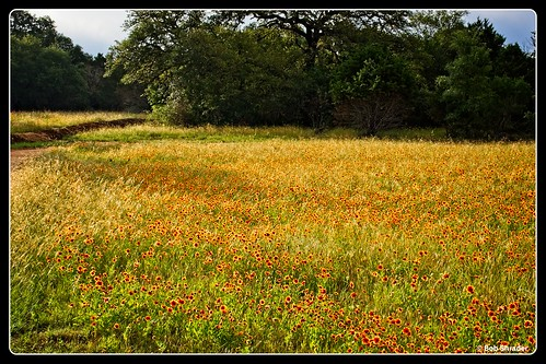 photoedge photoborder photoframe postprocessing plant pencamera northamerica mirrorless olympuspenf on1photoraw2018 on1photoraw texas style tree unitedstatesofamerica type springflower primelens preset processingsoftware sky raw grass hudsonhenryspring2018 ladybirdjohnsonwildflowercenter camera effect flower landscape mft microfourthirds lens mzuiko30mmf35macro m43 austin field olympusfilckraward