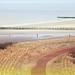 Dunes, mer du Nord et plage, Dombourg, Walcheren, Zeelande, Nederland by claude lina