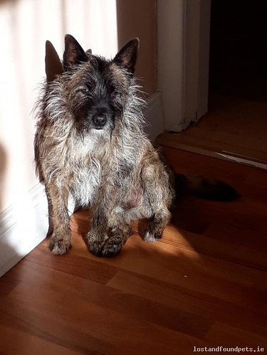 [Reunited Via Poster] Fri, Apr 27th, 2018 Lost Male Dog - Unnamed Road, Meath