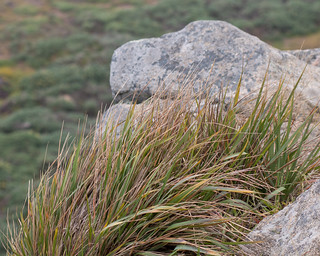 Point Reyes 5/2/16 #rock #grass #pacificcoast