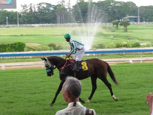 ロイヤルターフクラブ競馬場のレース後の馬