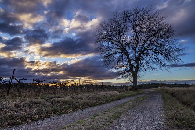 Country Path at Sunset, Nikon D600, AF-S Nikkor 18-35mm f/3.5-4.5G ED