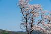 Photo:20180512-051.jpg By tsukacyi