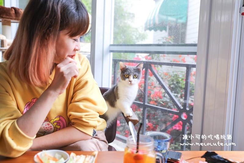 東森山林渡假酒店,楊梅咖啡館,貓森咖啡廳,貓森咖啡廳交通,麗多花鳥寵物世界股份有限公司 @陳小可的吃喝玩樂