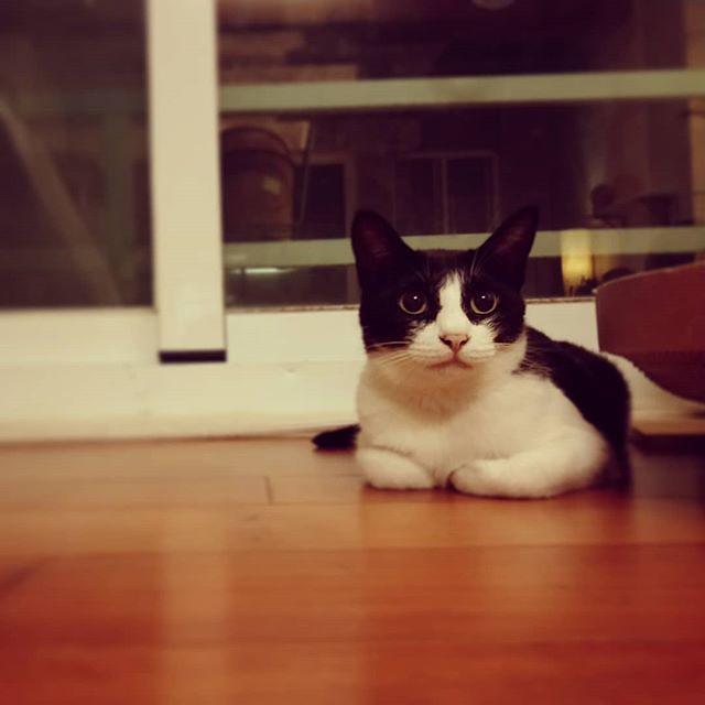 20180526 糖蜜:什麼? 今天星期六耶! 你們怎麼會在家? #戴家日常 #戴家黑糖蜜 #cats #livingwithcats