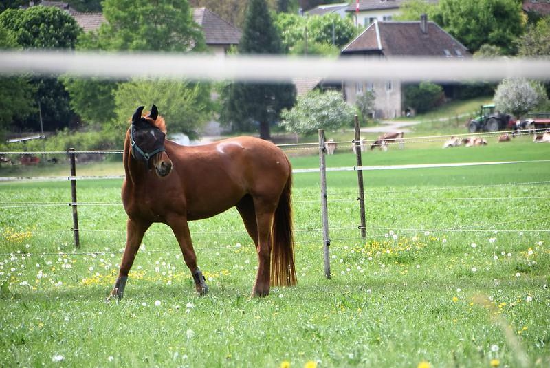 Horses 29.04 (2)