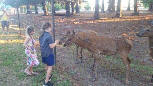 2018-01-20_1938.33_Feeding_deer