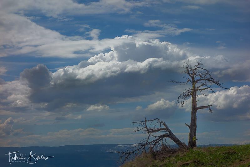Tree and croud