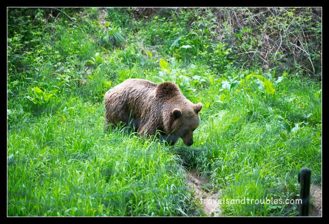 De enige beer