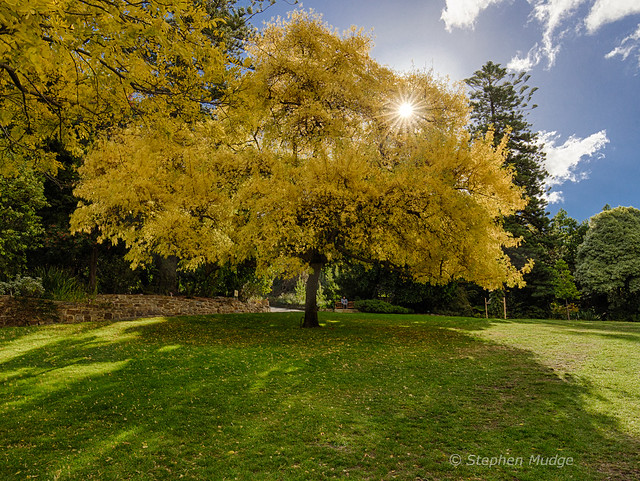 Autumn Colours in Hobart