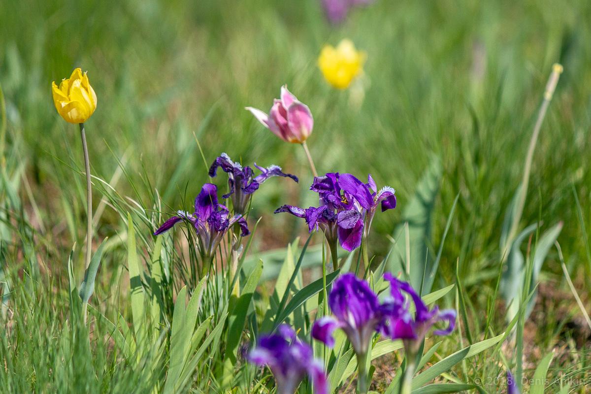 ирисы иваново поле саратовская область фото 11