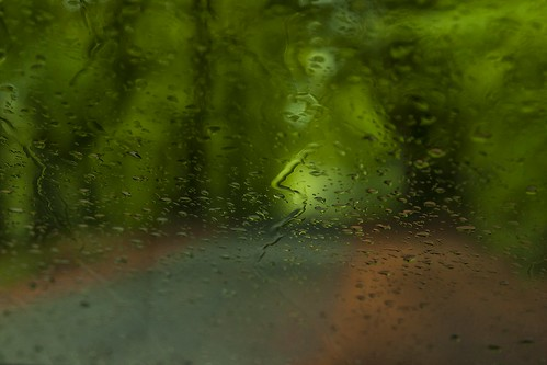 Forest Road Rain