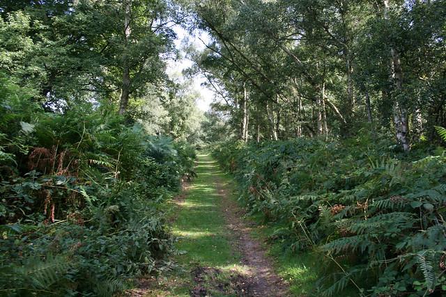 The Suffolk Coast Path on Snape Warren