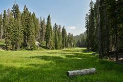 Halstead Meadow