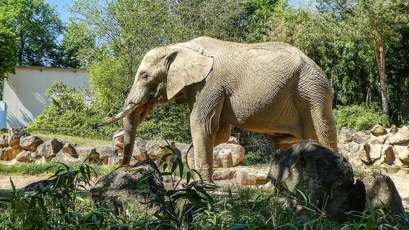 Zoo 28211609568_365274e0d1_c