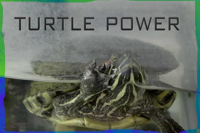 turtle power 4 jamieJo