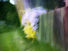 Flowers fence blur