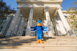 The new Cecil Sagehen mascot on the steps of Carnegie Hall, November 4, 2016.