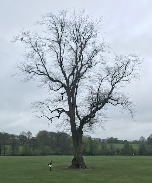 306 tree