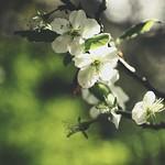 20180504-180540 Flower Bokeh