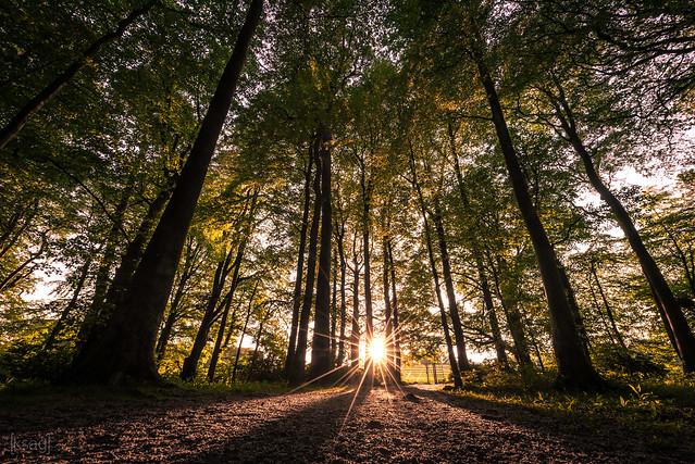 Sunset in Ashton Court, Nikon D750, AF-S Zoom-Nikkor 14-24mm f/2.8G ED