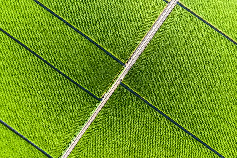 Green farmland Taiwan