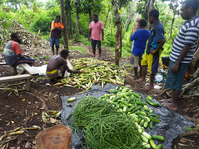 local villagers weighing snake beansm cucumbers and corn that has been grown in food security plantation
