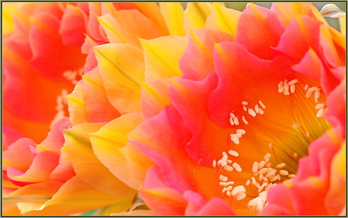 Cactus Sherbet