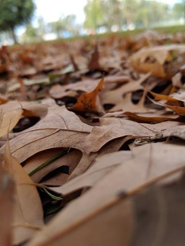 fall otoño
