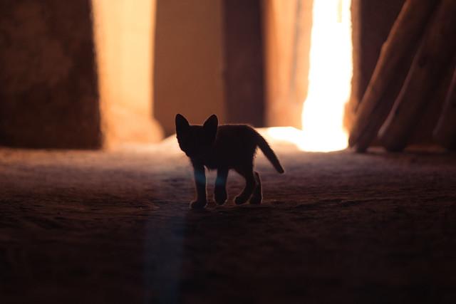Orphan kitten in Ouarzazate