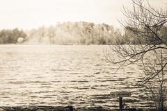 The Lake #45